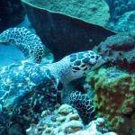 Schildpad bij Playa Lagun