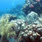 Onderwaterlandschap bij Best Reef