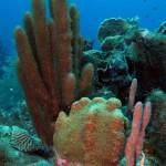 Onderwaterlandschap bij Marazul House Reef