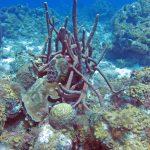 Divers koraal bij Playa Lagun