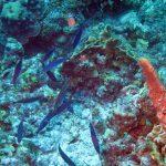 Vier strepen poetslipvis Porto Marie